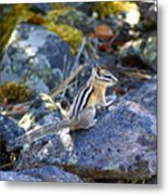 Chipmunk On The Rocks Metal Print