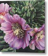 Cholla Flowers Metal Print