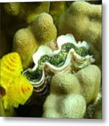 Clam On The Reef Metal Print