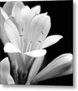 Clivia Flowers Black And White Metal Print