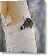 Close-up Of The Bark Of A Birch Tree Metal Print by Vlad Kharitonov