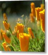 Closed California Poppies Metal Print