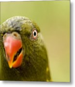 Closeup Of A Scaly-breasted Lorikeet Metal Print