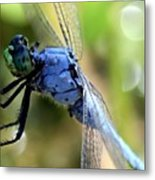 Closeup Of Blue Dragonfly Metal Print