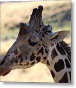 Closeup Of Giraffe Metal Print