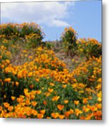 Clouds Over Poppies Metal Print
