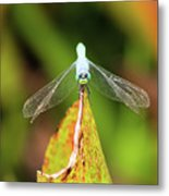 Clown Face Dragonfly Metal Print