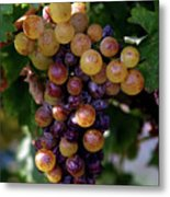 Cluster Of Ripe Grapes Metal Print