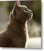 Clydes Profile Metal Print