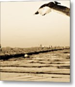 Coastal Bird In Flight Metal Print