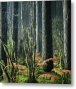 Cobwebs And Tree Trunks Metal Print