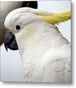 Cockatoo 3237 Metal Print