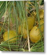 Coconut Palm Metal Print