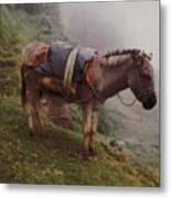 Colombian Burro In The Fog Metal Print