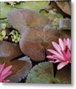 Colombian Pink Lillies Metal Print