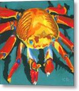 Colorful Crab II Metal Print by Stephen Anderson