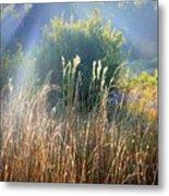 Colorful Morning Marsh Metal Print