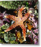 Colorful Seastar Laying On Cean Reef Metal Print by James Forte