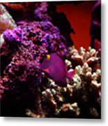 Colors Of Underwater Life Metal Print by Clayton Bruster