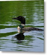 Common Loon Metal Print by Tony Beck