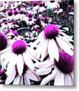 Cone Flower Delight Metal Print by Kevyn Bashore