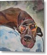 Cool Lab With Sunglasses Metal Print
