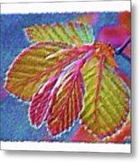 Copper Beech Leaves Metal Print