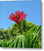 Coral Bush With Flower And Fruit Metal Print