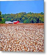 Cotton And The Red Barn Metal Print