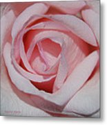 Cotton Candy Rose Metal Print