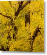Cottonwood Fall Foliage Colors Abstract Metal Print