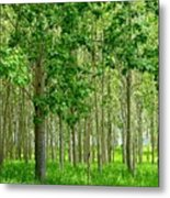 Cottonwood Grove Metal Print by Will Borden