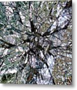 Cottonwood Montage Metal Print