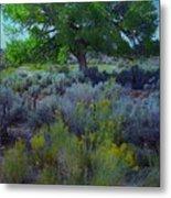 Cottonwood Tree In Old Field Metal Print