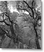 Cottonwood Trees-zion Metal Print