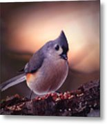 Country Mouse... Metal Print