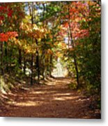 Country Path Metal Print