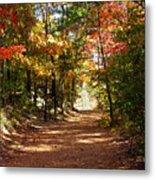Country Path Metal Print