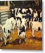 Cow Barn Metal Print