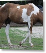 Cow Spotted Horse Metal Print