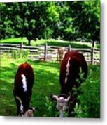 Cows Grazing Metal Print