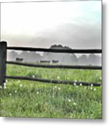 Cows In Field Metal Print