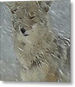 Coyote In Winter Metal Print