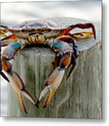 Crab Hanging Out Metal Print