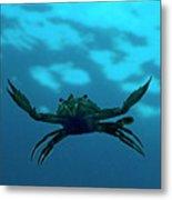 Crab Swimming In The Blue Water Metal Print