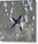 Creatures Of The Gulf - A Fallen Star Metal Print