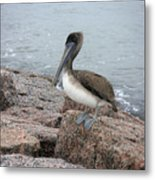 Creatures Of The Gulf - His Best Side Metal Print