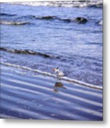 Creatures Of The Gulf - Seaing And Wading Metal Print