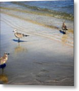 Creatures Of The Gulf - Which Way Metal Print