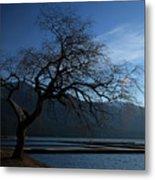 Cultus Tree Metal Print